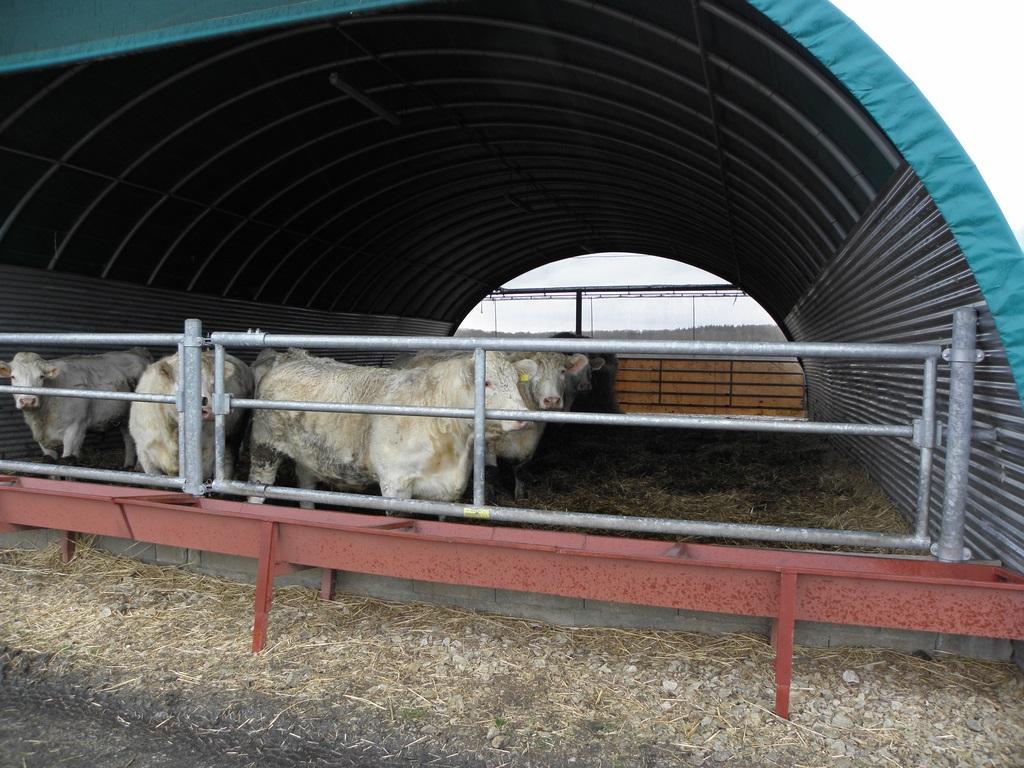 Un tunel pour l'élevage des génisses
